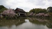 平安神宮:DSC01408.JPG