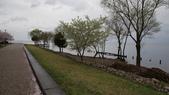 琵琶湖畔櫻花林:DSC01471.JPG
