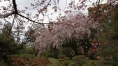 平安神宮:DSC01373.JPG
