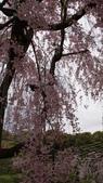 平安神宮:DSC01439.JPG