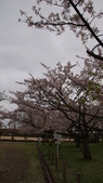 琵琶湖畔櫻花林:DSC01469.JPG