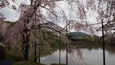 平安神宮:DSC01386.JPG