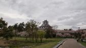 琵琶湖畔櫻花林:DSC01470.JPG