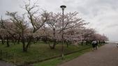 琵琶湖畔櫻花林:DSC01472.JPG