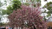 造幣局櫻花盛開:DSC01962.JPG