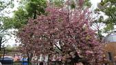 造幣局櫻花盛開:DSC01961.JPG