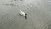 內湖:DSLR-A2001904.JPG