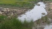高美濕地:2013-06-16 13.45.44.jpg