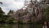 平安神宮:DSC01378.JPG