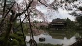平安神宮:DSC01395.JPG