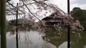 平安神宮:DSC01382.JPG