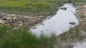 高美濕地:2013-06-16 13.45.42.jpg