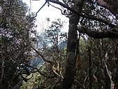 南插天山:tn_DSC05975.JPG