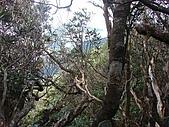 南插天山:tn_DSC05976.JPG