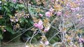 平安神宮:DSC01380.JPG
