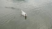 內湖:DSLR-A2001903.JPG