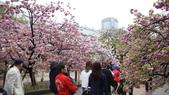 造幣局櫻花盛開:DSC02003.JPG