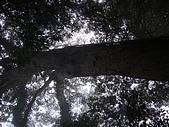 南插天山:tn_DSC05873.JPG