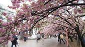 造幣局櫻花盛開:DSC02011.JPG