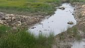 高美濕地:2013-06-16 13.45.43.jpg