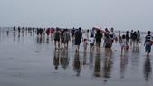 高美濕地:2013-06-16 13.51.53.jpg