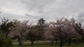 琵琶湖畔櫻花林:DSC01467.JPG