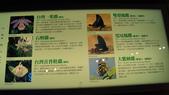 東台灣旅遊:DSC07713.JPG