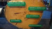 東台灣旅遊:DSC07718.JPG
