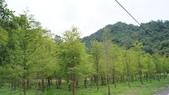 東台灣旅遊:DSC07997.JPG