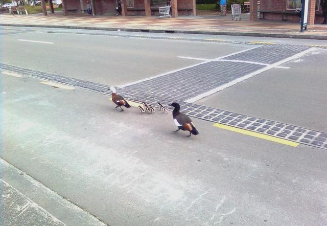 行動相簿:little birds 2.jpg