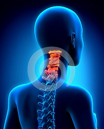 行動相簿:cervical-spine.jpg