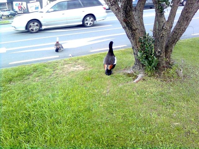 行動相簿:little birds 5.jpg