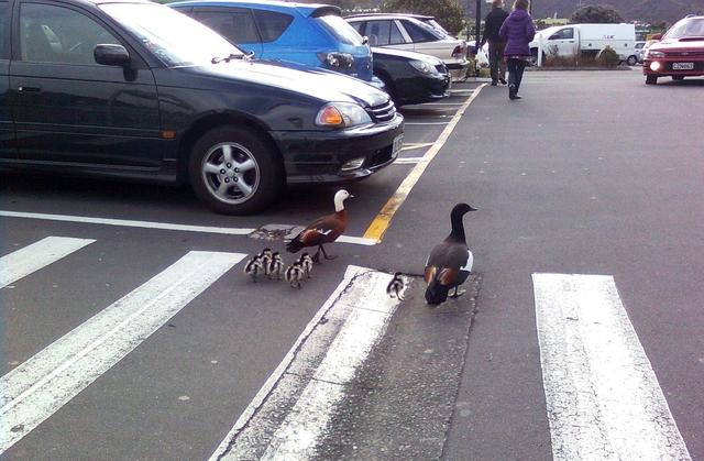 行動相簿:little birds 1.jpg