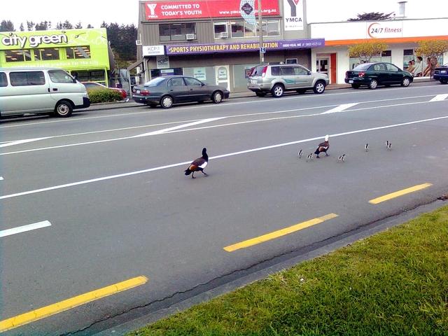 行動相簿:little birds 6.jpg