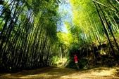 台灣中部景點攝影之旅:雲林五元二角綠廊17-.jpg