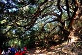 台灣中部景點攝影之旅:苖栗後龍土地公老榕樹12.jpg