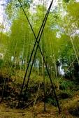 台灣中部景點攝影之旅:雲林五元二角綠廊18.JPG