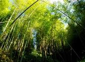 台灣中部景點攝影之旅:雲林五元二角綠廊16-.jpg