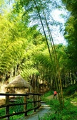 台灣中部景點攝影之旅:雲林五元二角綠廊12-.jpg