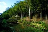 台灣中部景點攝影之旅:雲林五元二角綠廊35.jpg