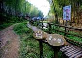 台灣中部景點攝影之旅:雲林五元二角綠廊22.jpg