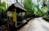 台灣中部景點攝影之旅:雲林五元二角綠廊10.jpg