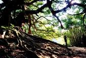 台灣中部景點攝影之旅:苖栗後龍土地公老榕樹61.jpg