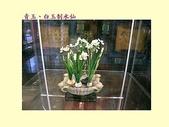 部落格照片 ~ 2:ap_F23_20090406041000660.jpg