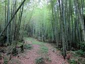 20150607 三峽熊空茶園登熊空山竹坑山O型:熊空山竹坑山14.JPG
