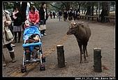 2009京都賞楓之旅-Day3 :003_IMG_6025.jpg