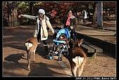 2009京都賞楓之旅-Day3 :015_IMG_6064.jpg