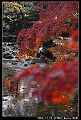 2009京都賞楓之旅-Day3 :017_IMG_6076.jpg