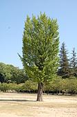 日本@國寶-姬路城+岡山城:11姬路城前松樹.JPG