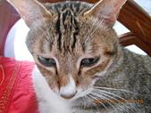 氣質貓咪~~~:DSCN1988.JPG